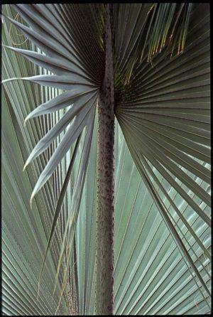 ConservatorySlide1.jpg